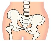 骨盤イメージ